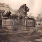 London – Trafalgar Square lion at Nelson's Column