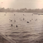 London – ducks on lake