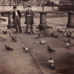 London – Trafalgar Square pigeons
