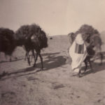 camel carrying straw with native
